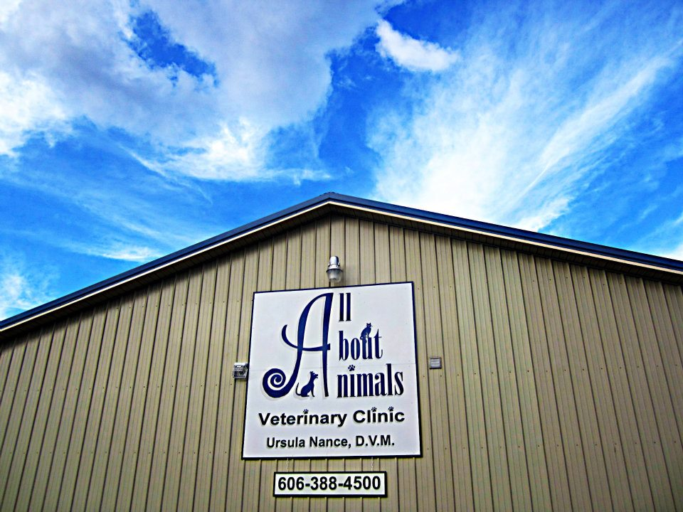 Home Veterinarian In Flatwoods Ky All About Animals Veterinary Clinic